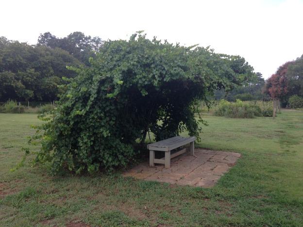 Mr. Cason's Vegetable Garden